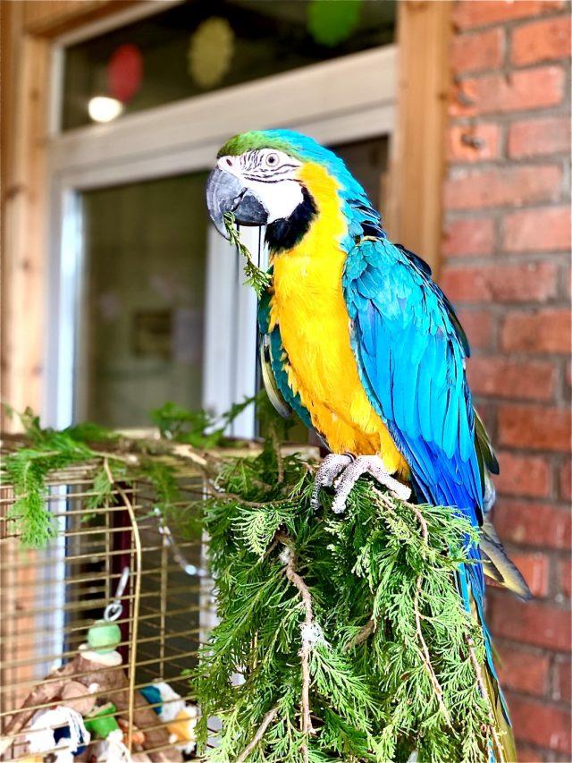 Papuga Ara - Deli Park