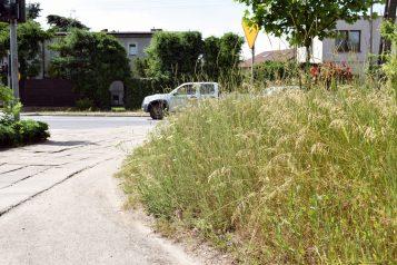 Zarośnięte centrum Mosiny w okresie letnim
