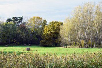 Jesień w okolicach Rogalina